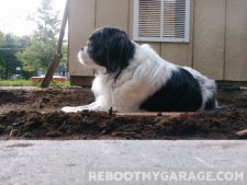 Our very chill dog helping build the generator shed.