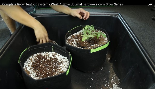 Plant the clones in the grow bag with the planting media