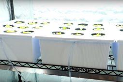 Grow tent hydroponic pods with lettuce and cucumbers
