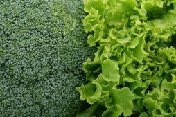 Grow lettuce and broccoli